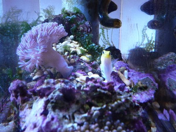 うおっち&ももの海水魚日記-チビチビ1