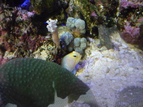 うおっち&ももの海水魚日記-タマゴ2