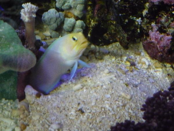 うおっち&ももの海水魚日記-タマゴ3