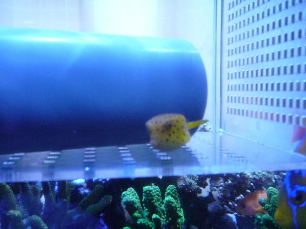 うおっち&ももの海水魚日記-採集4