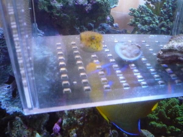 うおっち&ももの海水魚日記-隔離ケース