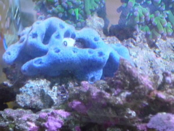 うおっち&ももの海水魚日記-スポンジ1