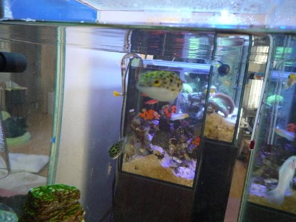 うおっち&ももの海水魚日記-汽水1