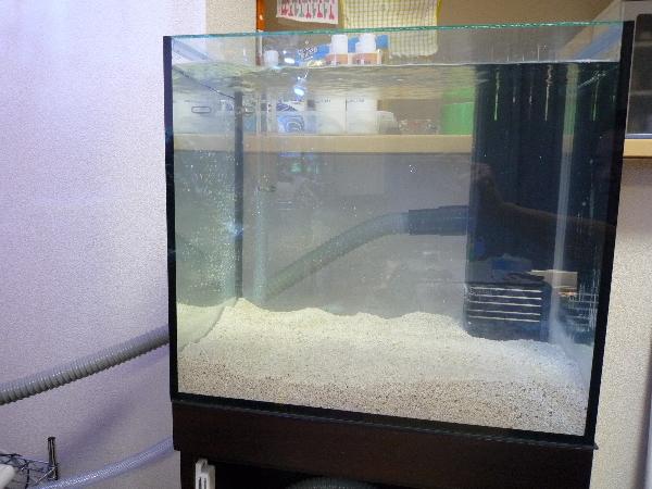 うおっち&ももの海水魚日記-45cm-2