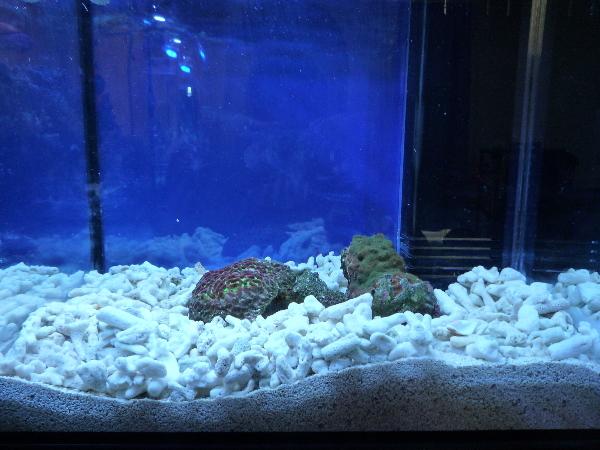 うおっち&ももの海水魚日記-45cm
