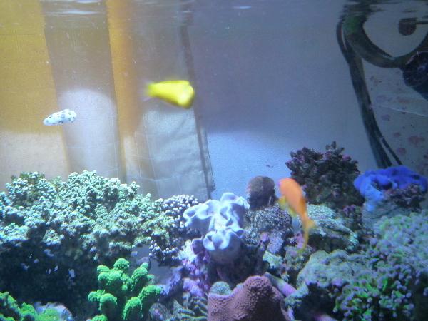 うおっち&ももの海水魚日記-ブチウミウシ2
