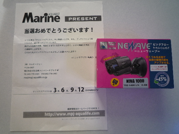 うおっち&ももの海水魚日記-MA-4
