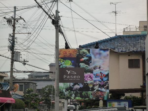 うおっち&ももの海水魚日記-PSO