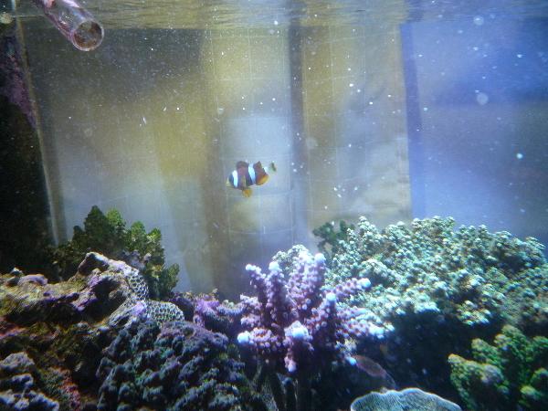 うおっち&ももの海水魚日記-90-3