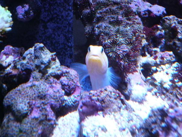 うおっち&ももの海水魚日記-ジョー1