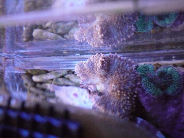 うおっち&ももの海水魚日記-バブル5