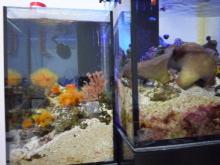 うおっち&ももの海水魚日記-30cm