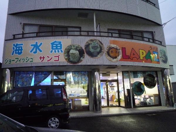 うおっち&ももの海水魚日記-R-1