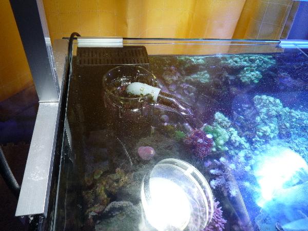 うおっち&ももの海水魚日記-NWB-3