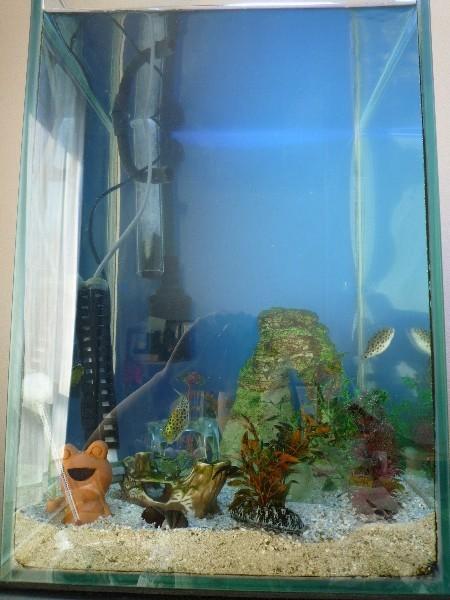うおっち&ももの海水魚日記-汽水-1