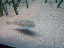 うおっち&ももの海水魚日記-竹水7