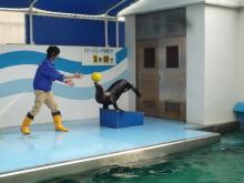 うおっち&ももの海水魚日記-竹水32