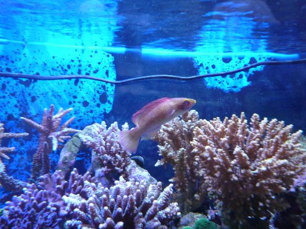うおっち&ももの海水魚日記-08-12-29(1)