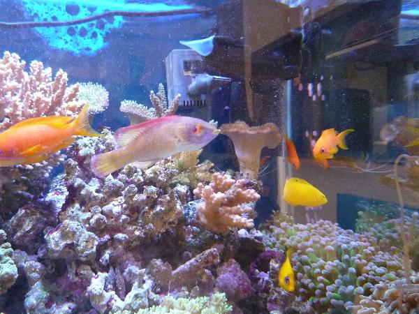うおっち&ももの海水魚日記-09-01-05(2)
