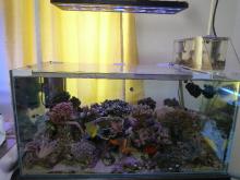 うおっち&ももの海水魚日記-LED-5