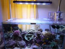 うおっち&ももの海水魚日記-LED-6