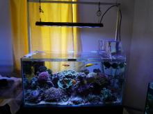 うおっち&ももの海水魚日記-LED-9