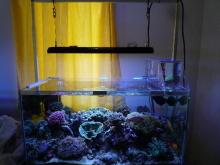 うおっち&ももの海水魚日記-LED-11