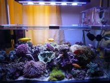 うおっち&ももの海水魚日記-LED-12