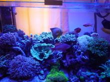 うおっち&ももの海水魚日記-LED-13