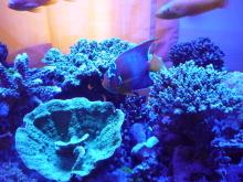 うおっち&ももの海水魚日記-LED-14