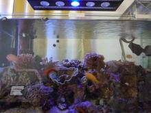 うおっち&ももの海水魚日記-LED-15