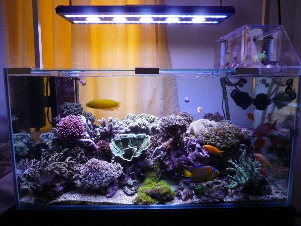 うおっち&ももの海水魚日記-90cmLED-1