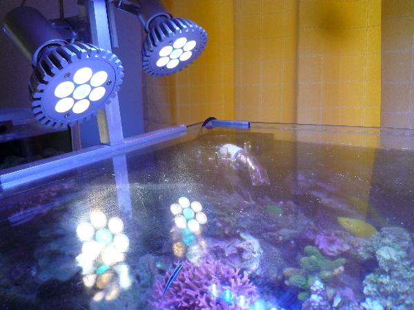 うおっち&ももの海水魚日記-LED7W-3
