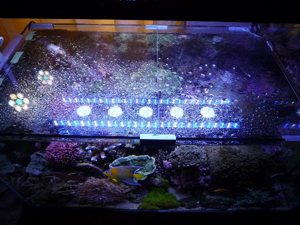 うおっち&ももの海水魚日記-90-2