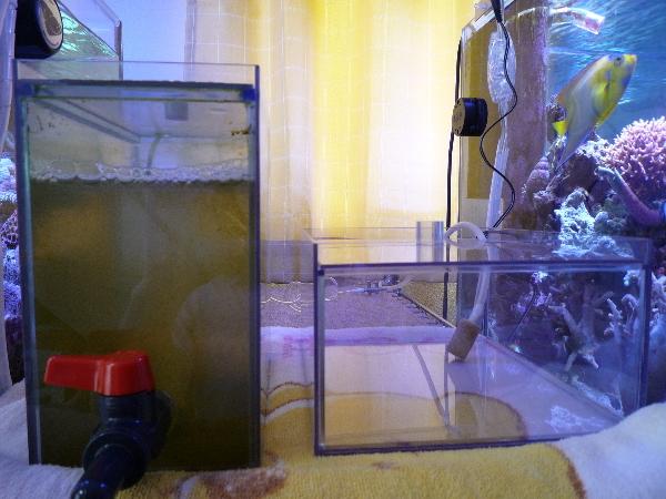 うおっち&ももの海水魚日記-ワムシ1