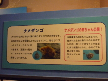 うおっち&ももの海水魚日記-しながわ13