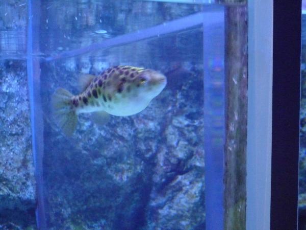 うおっち&ももの海水魚日記-エプソン11