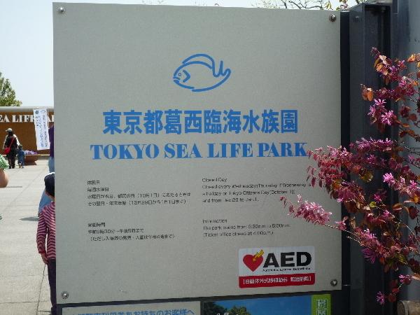 うおっち&ももの海水魚日記-葛西2