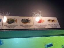うおっち&ももの海水魚日記-葛西11