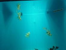 うおっち&ももの海水魚日記-葛西17