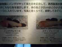 うおっち&ももの海水魚日記-葛西29