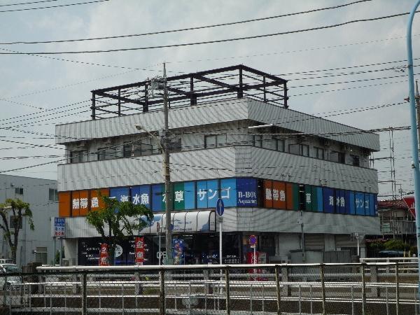 うおっち&ももの海水魚日記-B八潮