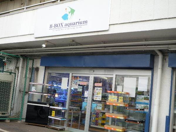 うおっち&ももの海水魚日記-B松戸