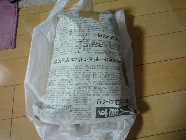 うおっち&ももの海水魚日記-ミドリイシ6