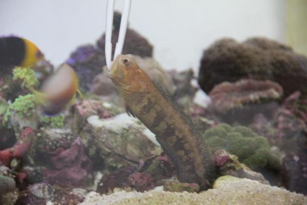 うおっち&ももの海水魚日記-レッド4