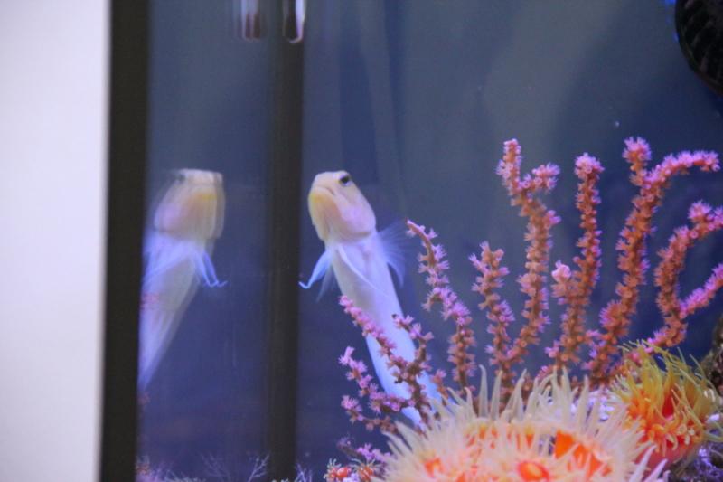 うおっち&ももの海水魚日記-30-2