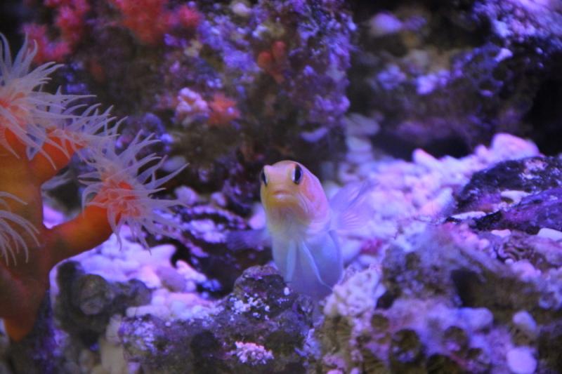 うおっち&ももの海水魚日記-30-3