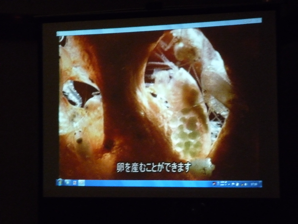 うおっち&ももの海水魚日記-神戸賞8