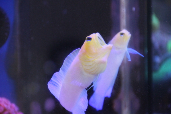 うおっち&ももの海水魚日記-ガーン