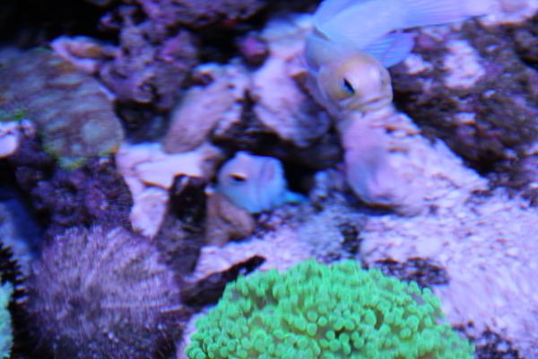 うおっち&ももの海水魚日記-60-3